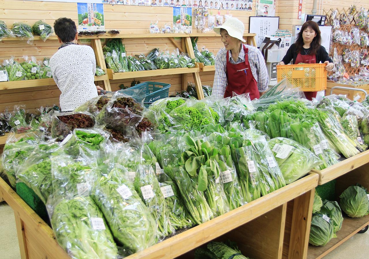 安心安全的新鲜蔬菜