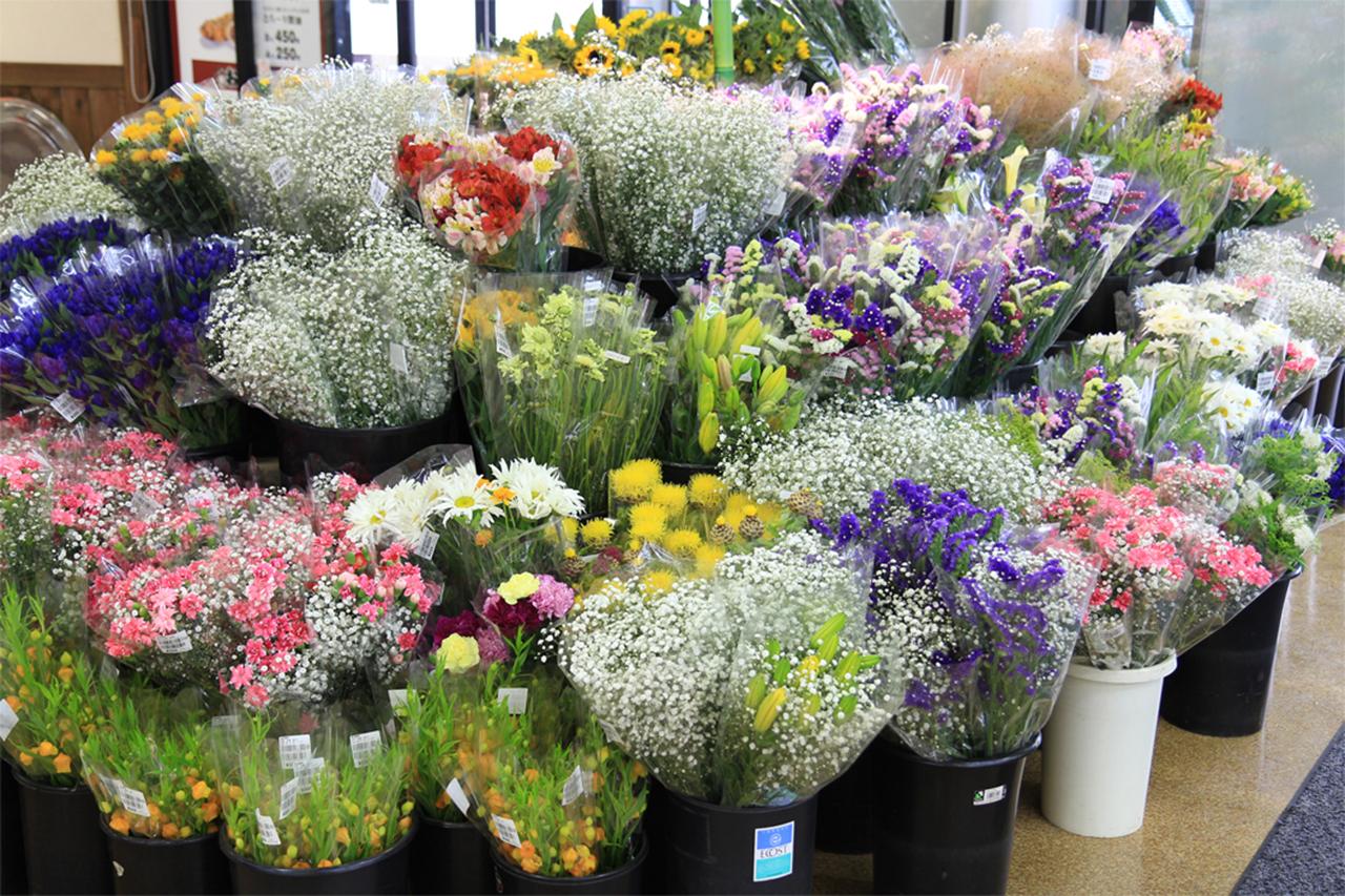色彩鲜艳的花